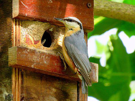 Kleiber, Nesting Box, Feeding, Boy, Bird, Songbird