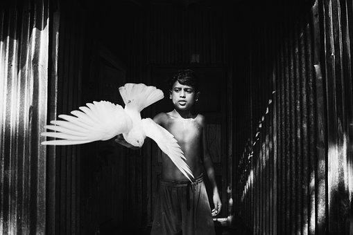 Pigeon, Blackandwhite, Blackandwhitephotography