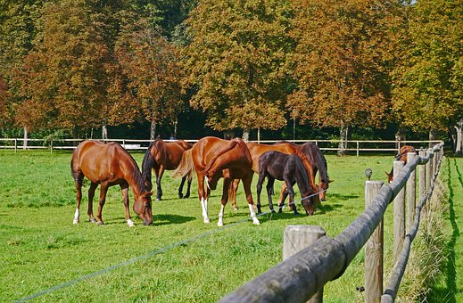 Autumn, Coupling, Horses, Brown, Fence, Solid, Chestnut