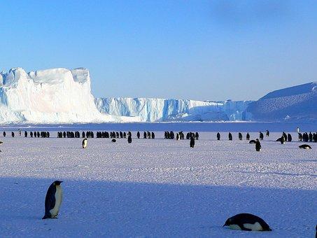 Penguins, Emperor, Antarctic, Life, Animals, Cute, Ice