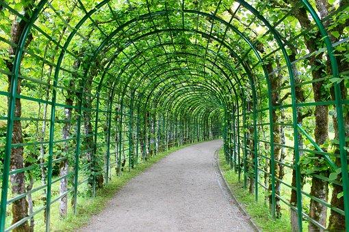Bower, Hedge, Leaves, Fenced, Input, Garden, Background