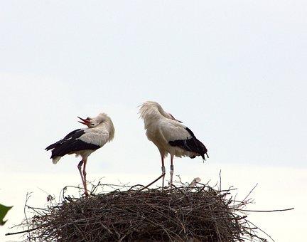 Stork Couple, Welcome, Ritual, Joy