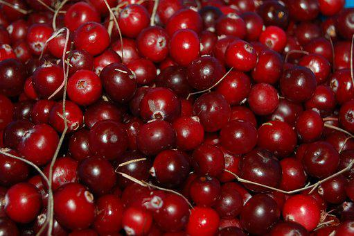 Cranberries, Berry, Red, Vitamin, Autumn, Swamp, Fruit
