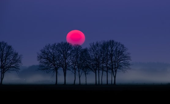 Red, Sun, Fog, Landscape, Nature, Outdoor, Trees, Dark