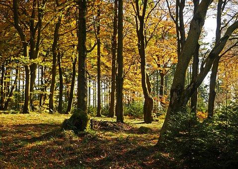 Autumn Forest, The Ebbe Mountains, Sauerland, Altitude