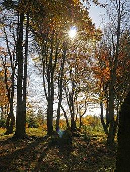 Autumn Sun, Golden October, Forest, Autumn Forest