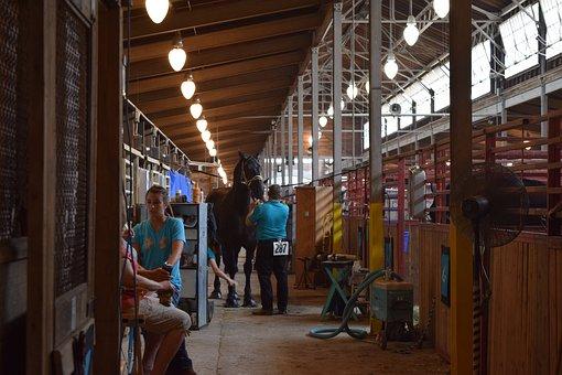 Horse, Barn, State Fair, Iowa, Prep, Riding, Livestock