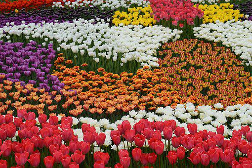 Flowers, Color, Bright Colors, Beautiful Flowers
