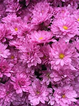 Pink, Flowers, Bouquet, Blossom, Pretty, Little Flower