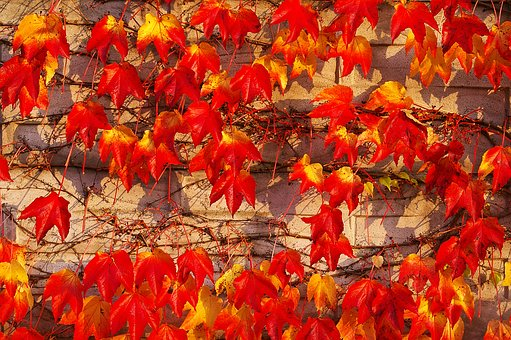 Autumn, Fall Foliage, Golden Autumn, Leaves, Colorful