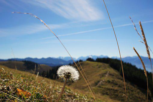High Ball, Dandelion, Sky, Plant, Nature, Flower, Blue