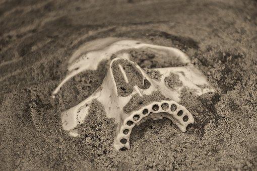 Skull, Death, Fossil, Teeth, Sand, Dead, Halloween