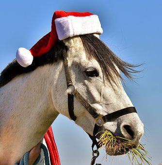 Mold, Santa Hat, Christmas, Funny, Cute, Animal, Eat