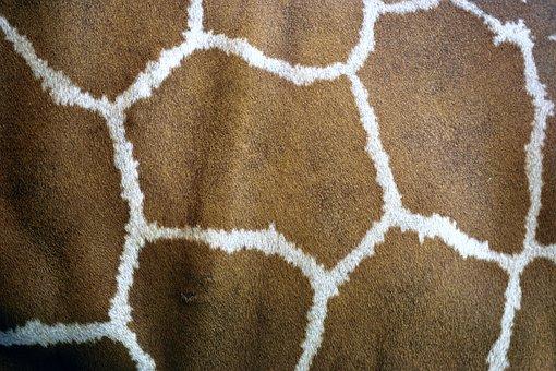 Giraffe Skin, Giraffe, Animal, Pattern, Skin, Wild