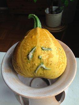 Pumpkin, Hubby, Yellow