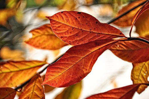 Leaf, Branch, Tree, Foliage, Veins, Autumn