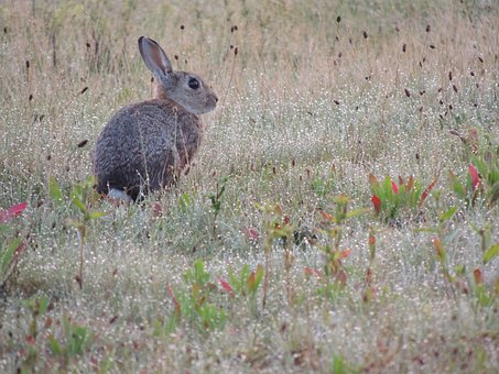 Hare, Animal, Nature, Long Eared, Rodent, Sweet, Grass