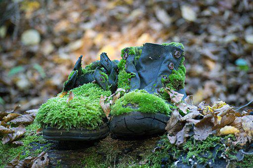 Shoes, Moss, Forest, Old, Outdoor, Mountaineering Shoes