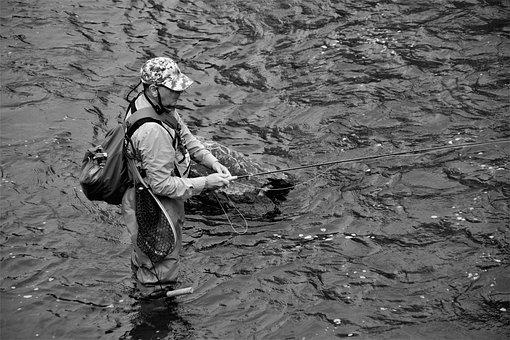 Fisherman, Fly Fishing, River, Stream, Water, Fly