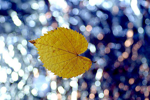 Leaf, Lipa, Yellow, Colorful Background, Single, Gold