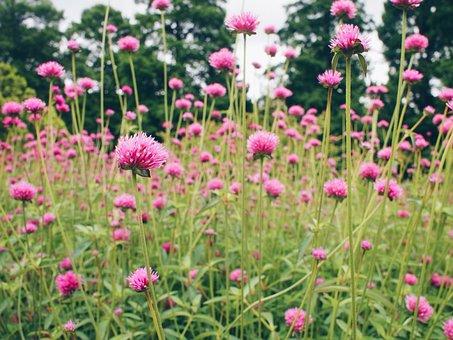 Botanical, Garden, Philadelphia, Longwood Gardens, Pink