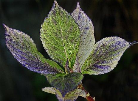 Leaf, Dewdrop, Autumn, Drip, Moist, Fall Color