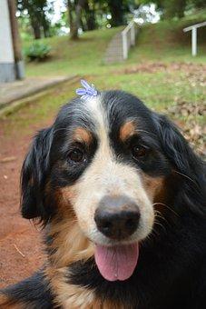 Dog, Old Dog, Smile, Cute, Flower, Old, Pet, Animal