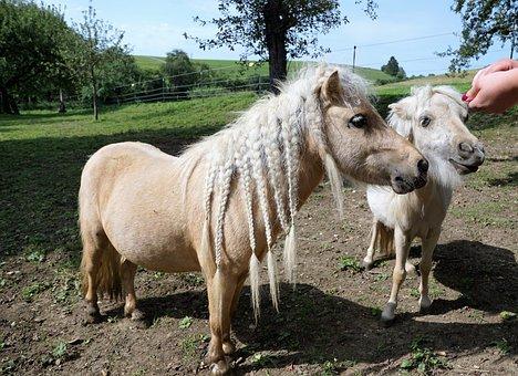 Animals, Sweet, Braids, Zoo, Cute, Pony, Horse, Eat