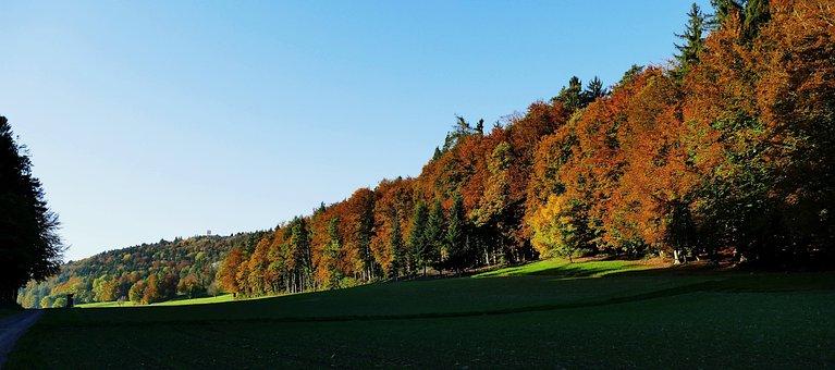 Nature, Sun, Autumn, Trees, Edge Of The Woods, Away