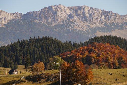 Logs, Romania, Autumn, Nature, Landscape, Forest