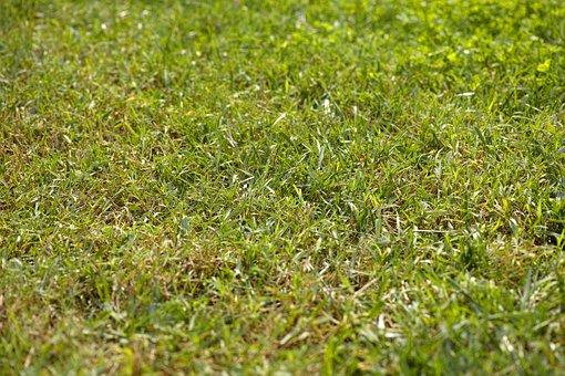 Grass, Texture, Rural, Horizontal, Macro, Day, Summer