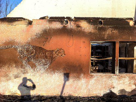 Cheetah, Africa, Namibia, Cat, House, Fire, Accident
