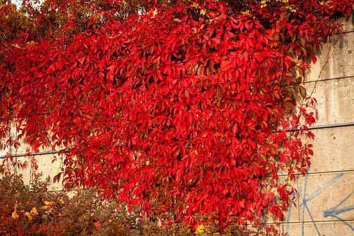 Autumn, Fall, Nature, Leaves, Red, Bright, Season