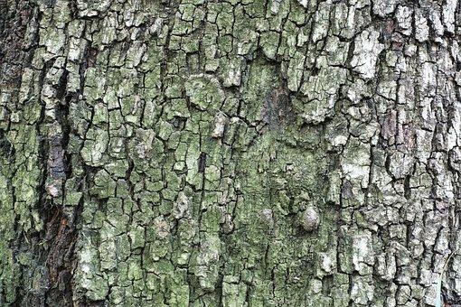 Tree, Texture, Billet, Timber, Detail Shots, Nobody