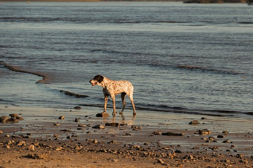 Dog, Beach, Elbe, Water, Animal, Sand, Sea, Most Beach