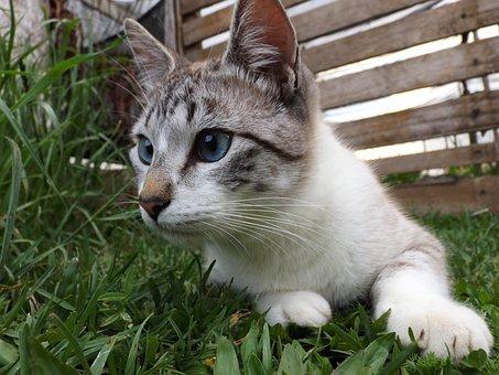 Cat, Striped, Pet, Cute, Kitten, Domestic Animals
