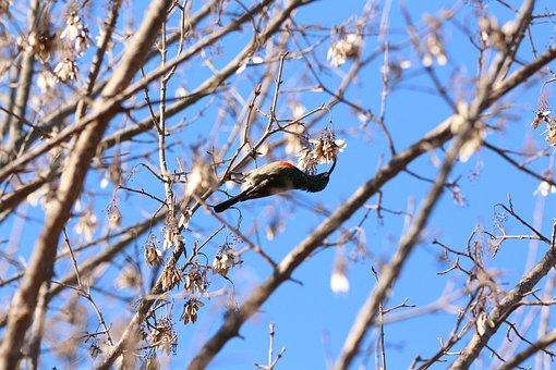 Sunbird, Bird, Wildlife, Nature, Tree, Feather