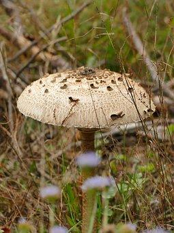 Autumn, Mushroom, Boletes, Forest, Mushroom Picking