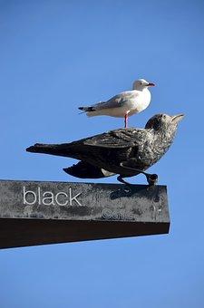 Birds, Raven, Gull, Cafe, Coffee, Crow, Black, White