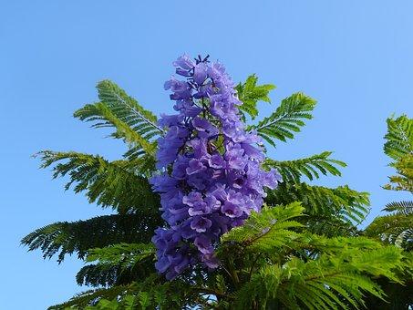 Garden, Flowers Lilac, Autumn, Trees, Flowers, Macro
