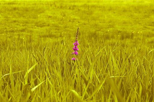 Meadow, Green, Grass, Nature, Field, Blade Of Grass