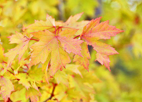 Fall, Autumn, Leaves, Yellow, Red, Orange, Season