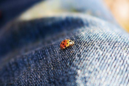 Ladybug, Beetle, Insect, Red, Macro, Pants, Jeans, Blue