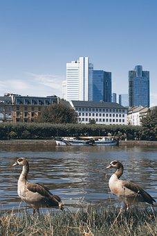 Entirely, Frankfurt, River, Main, Skyline, Town Center