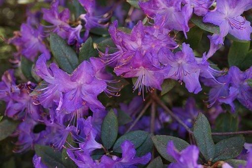 Natural Bouquet, Native Flowers, South Australia