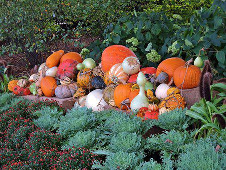 Pumpkin, October, Autumn, Holiday, Orange, Fall, Season
