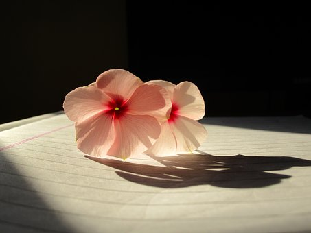 Rosy Periwinkle, Light, Abstract