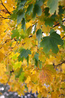 Autumn, Fall, Nature, Leaves, Yellow, Season