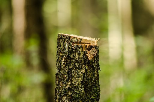 Forest, Slice, Gardening, Trunk, Cut, Tree, Sawn Timber