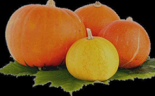Pumpkin, Thanksgiving, Vegetable, Leaf, Harvest